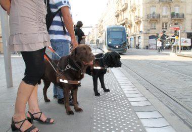 Deux chiens-guides dans les rues de Bordeaux
