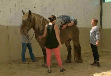 Des non-voyants et un cheval