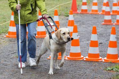 Parcours avec un chien guide