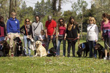 Les chiens-guides de l'école CECIDEV