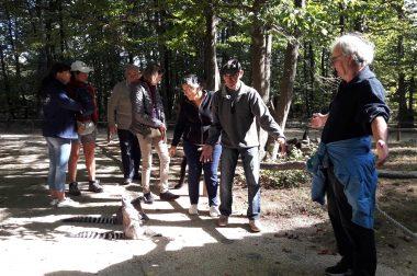 Déficients visuels au milieu des bois avec des lémuries petits singes