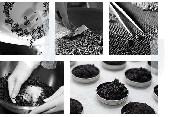 Production de caviar