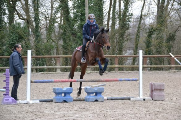 cavalier qui saute un obstacle de 50 cm.