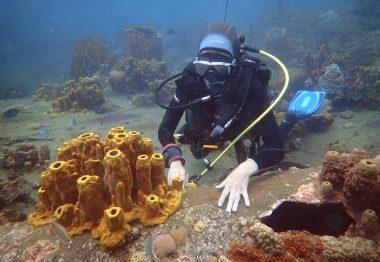 plongeuse face à une éponge