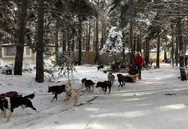 traineaux et chiens